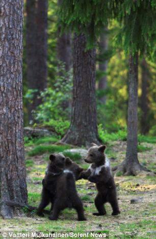 从浪漫满屋跑出来的三只小黑熊