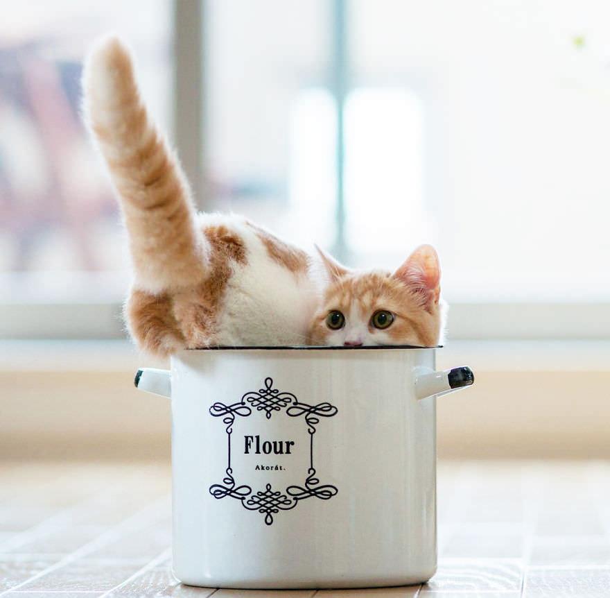 在這種冷冷的天氣裡土井意外的在網路上發現 天啊~哪來這種超萌系的動物寫真……..((閃眼… 很難想像吧!當一隻超可愛的毛茸茸的小動物如果 搭上咖啡馬克杯時,是不是有種驚喜般的微笑呢! 天氣冷時想拿個馬克杯來裝熱可可時,意外發現馬克杯裡 如果躲著一隻小貓咪或者小松鼠時,除了嚇一跳之外,也會被這種 微妙的組合感噗呲一笑(你知道的,咖啡杯+小松鼠=?