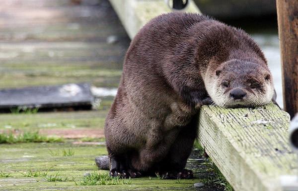 看看这些小动物们沮丧的脸