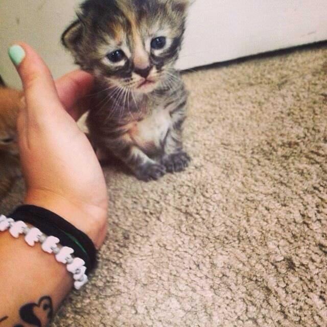 沮丧的光波…)))))看看这些小动物们沮丧的脸 猫星人:一副心紧迈的