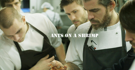 ants-on-a-shrimp2